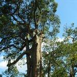 il bellissimo e imponente albero