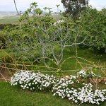 jardin (accessible aux clients)