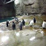 Pinguine (2014)
