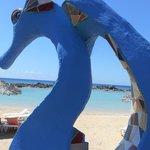 Cavallucci di mare