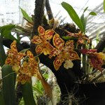 Photo of Pregetter's Orchid Garden