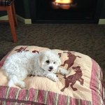 Lily enjoying her treat by the fire