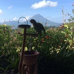 Breakfast companion and a volcano view.
