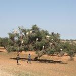 De camino a Essaouira