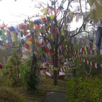 Plenty of prayer flags