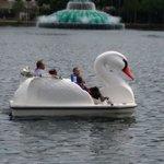 Large, sturdy swan boats