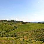 oliveti e vigne davanti alla Loggia
