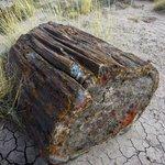 a rock log