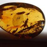 Polished amber piece