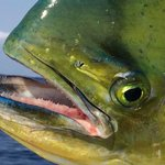 Fishing trips with Costa Rica Private Tours