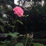 Magnifica flor na casa das rosas!!