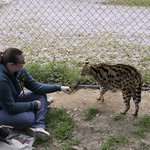 You can get in the cage with the servals and pet them!