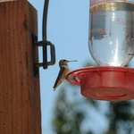 Hummingbirds out on the patio, bring your camera