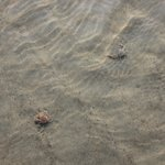 население пляжа