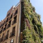 Madrid wall garden