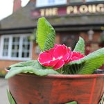 Mothers Day at The Plough