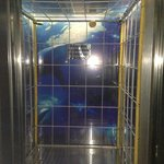 cage diving themed elevator