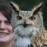 Kylie and feeding owl