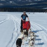 Dog sledding in a t-shirt is not mandatory - but fun!