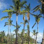 Grand Anse Beach Palms (nearby)