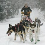 Dog Sledding is great fun from the Lodge