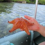 local starfish from boat tour
