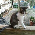 Kitty resident