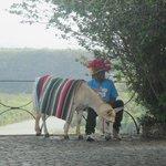 Dominicain costumé
