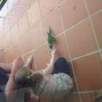 Feeding the lorikeets