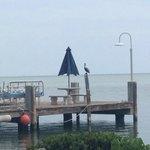 Dock with lots of pelicans