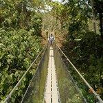 Supsension Bridge on the Aqua Hike