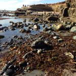 Tide pool lowest time