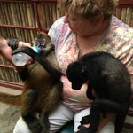 bottle feeding baby  monkeys