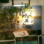 Bird Eco Display