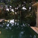 It's a bit dark but the infinity pool has a serene vibe surrounded by lush greenery
