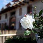 Rose vor Scheune