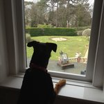 Skye enjoying the view