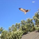 Birds of prey show