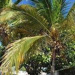 relax sulla palma
