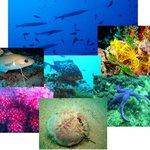 La faune de nos sites de plongée