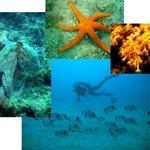 La vie sous-marine de nos sites de plongée