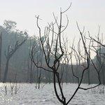 Dead trees - surreal landscape