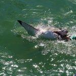 Shark Cage Dive Trip