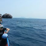 Best Diving in the Gulf @ sailrock!  With Dreamland Diver