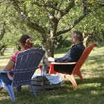 Relaxing in the orchard