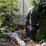Crocodile in the reptile house