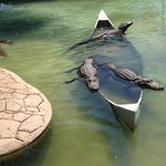3 of the many gators