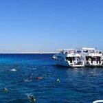Snorkelling at Tiran Island