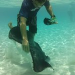 Our guide with a sting ray