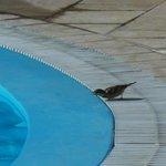 Pajarito en piscina